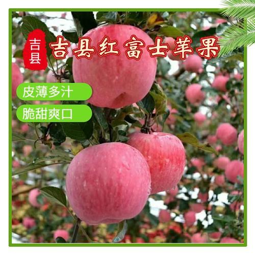 壶口苹果水果新鲜当季整箱10斤脆甜山西吉县冰糖心红
