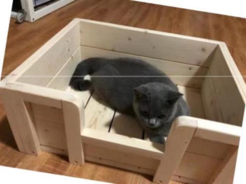 母猫狗窝大型犬生产猫狗怀孕狗房窝可拆洗繁殖宠物窝产床生