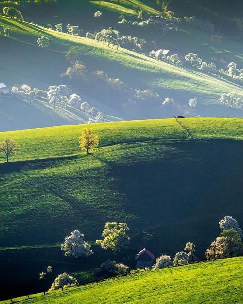壁纸草原成片种植风景植物种植基地桌面690862竖版竖屏