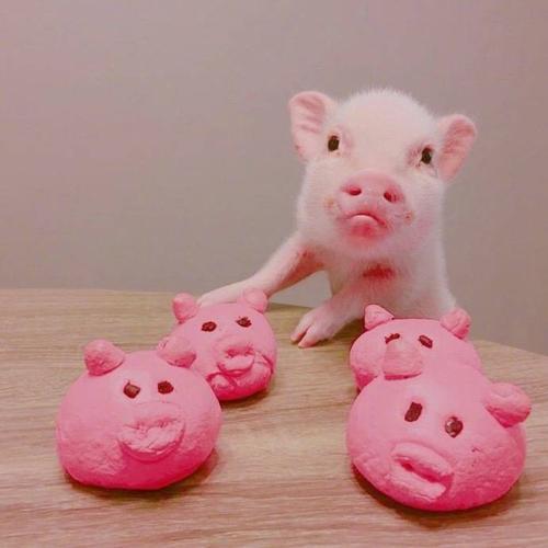 霸气的猪头像图片